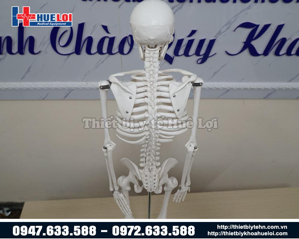 mô hình xương