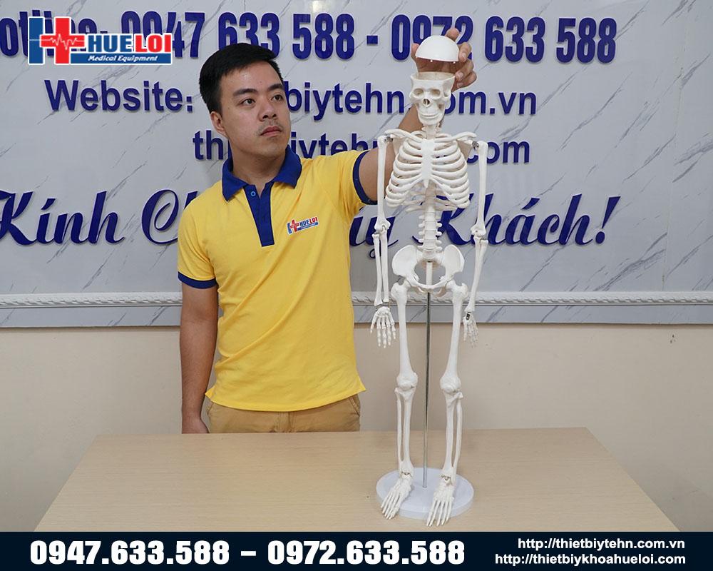 mô hình xương cơ thể