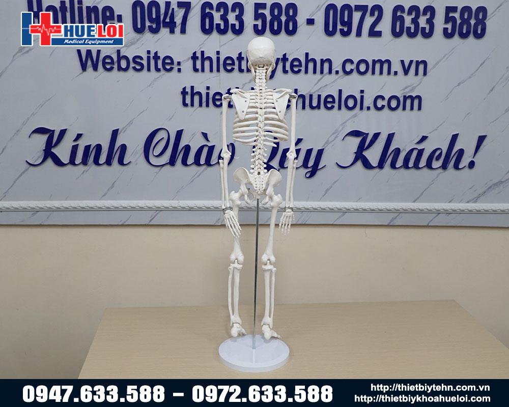 mô hình xương toàn thân