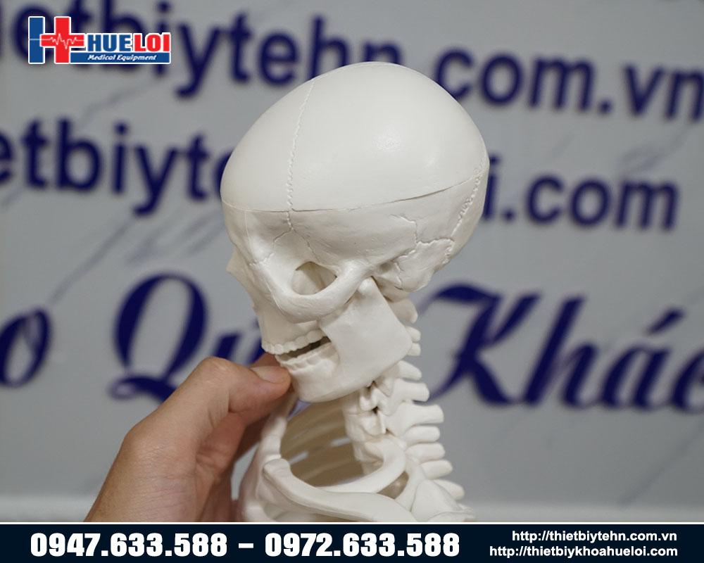 Mô hình xương chi tiết