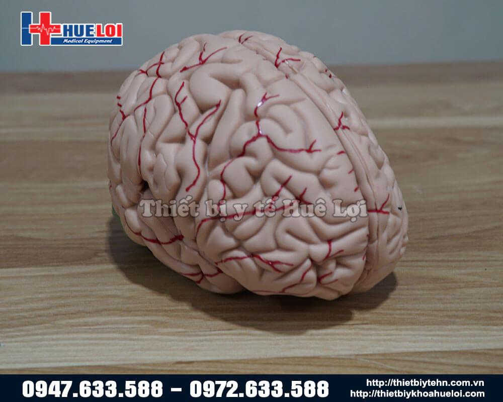Tổng quan mô hình não người